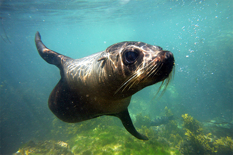 Seal Swim Kaikoura Photo Gallery